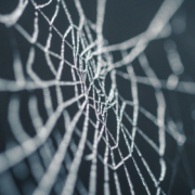 Silhouette of a spider web
